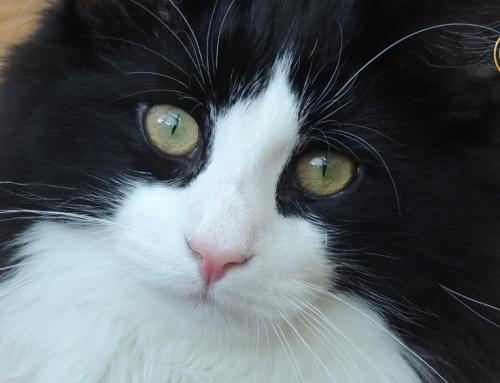 Urološki sindrom kod mačaka