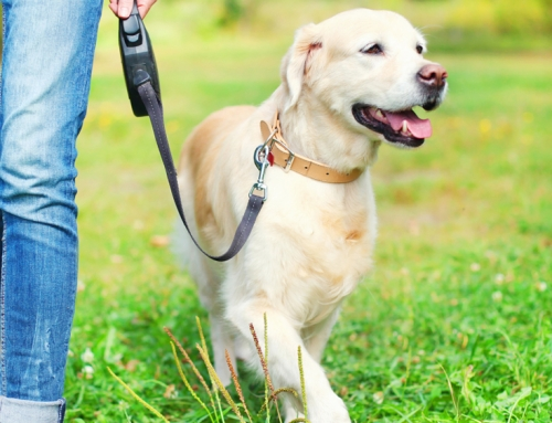 Naučite psa da hoda uz vas
