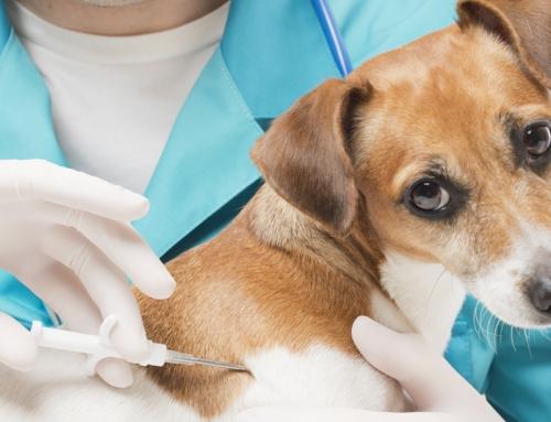 Kako i kada vakcinisati kućnog ljubimca