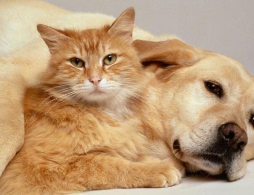 Štetna hrana za vašeg psa i mačku