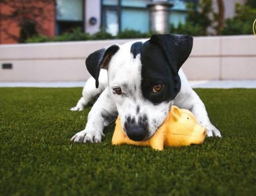Atopijski dermatitis kod pasa i mačaka